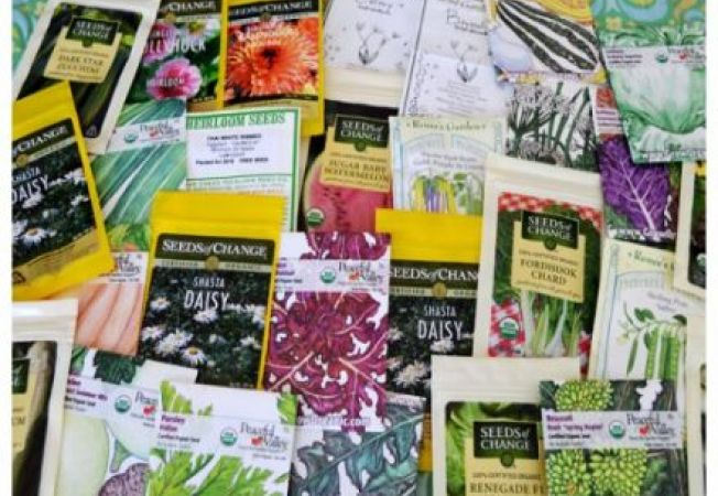 Invata sa faci diferenta intre soiurile de seminte pentru plantare