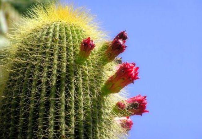 Tipuri de flori care rezista mult timp fara apa