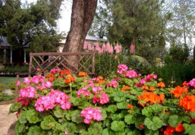 4 plante care nu au nevoie de o atentie deosebita