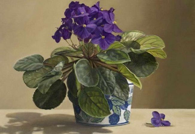 5 plante care infloresc si intr-un ghiveci mic