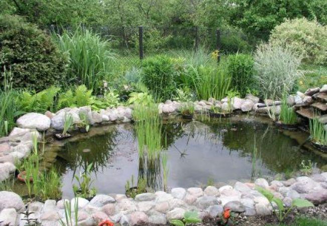 4 idei pentru spatii mici de apa in gradina