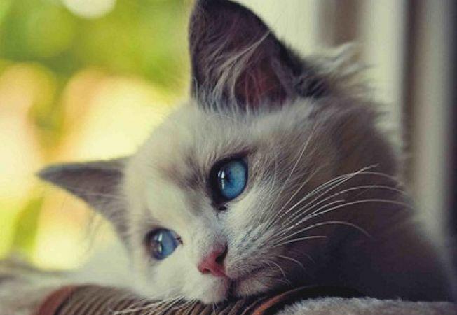 5 greseli care pot traumatiza pisica