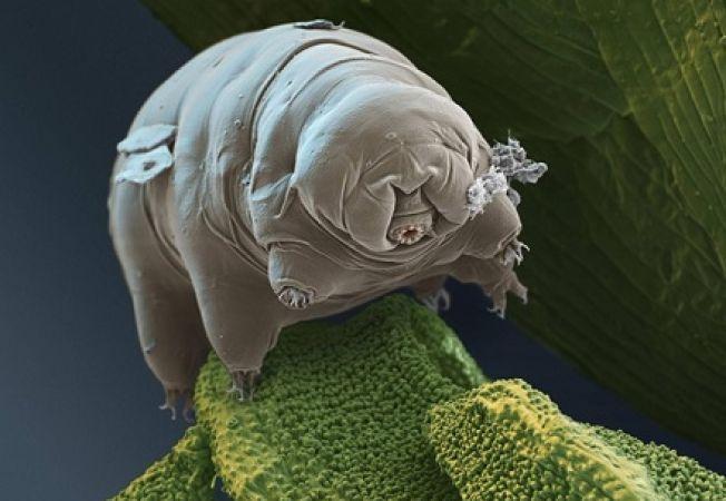Cele mai terifiante imagini microscopice