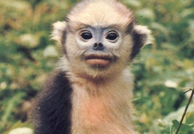 Cele mai rare animale pe care nu le-ai vazut vreodata