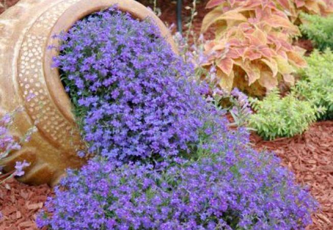 """Ghivece cu flori """"varsate"""": cum sa le introduci in decorul gradinii tale"""