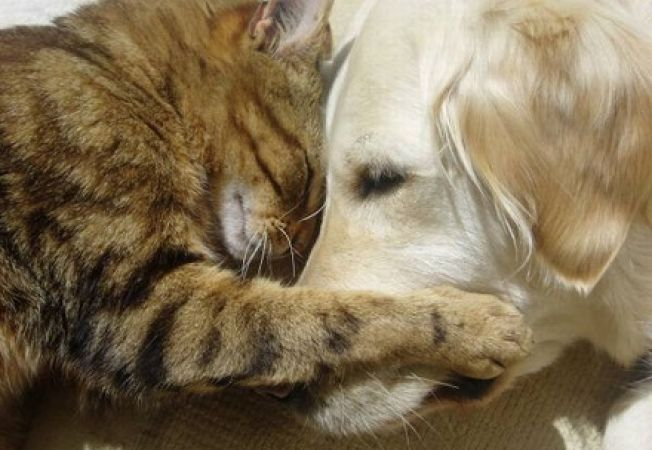 10 momente cand este necesara vizita la medicul veterinar