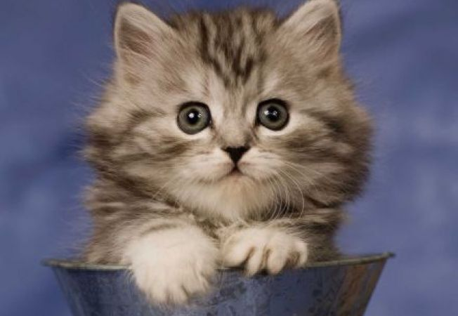 6 curiozitati despre pisici