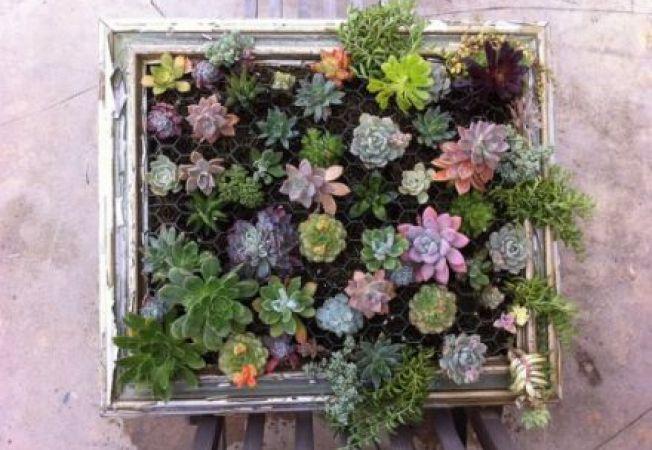 4 moduri de a obtine decoratiuni interesante cu ajutorul plantelor suculente