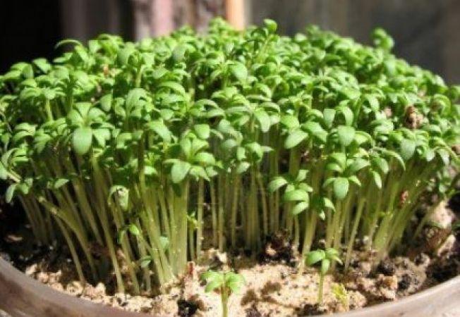 Telefonul mobil poate influenta dezvoltarea plantelor