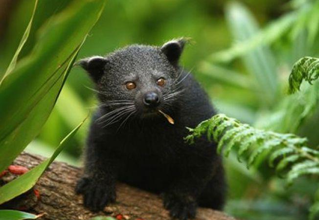 6 cele mai simpatice animalute care traiesc in copaci