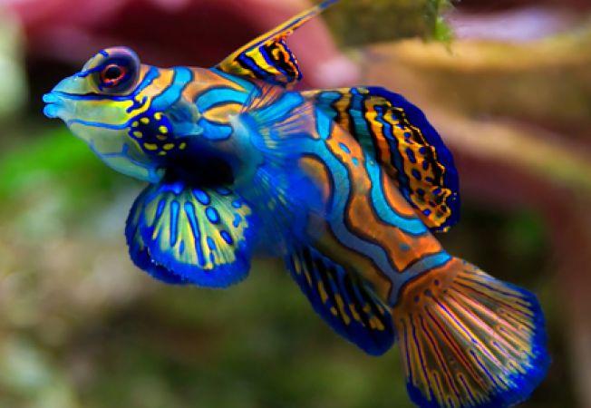 5 specii superbe de pesti din recifurile de corali