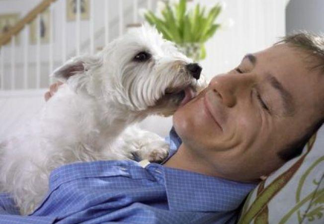 Ce vrea sa-ti transmita cainele atunci cand te linge?
