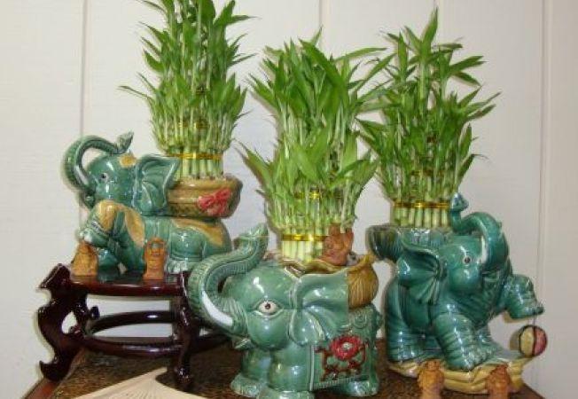 Canalizeaza energia pozitiva in casa ta cu ajutorul plantelor Feng Shui!