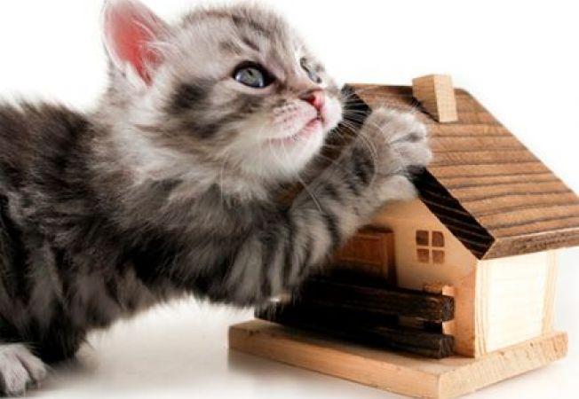Casute simpatice si originale de interior pentru pisicute