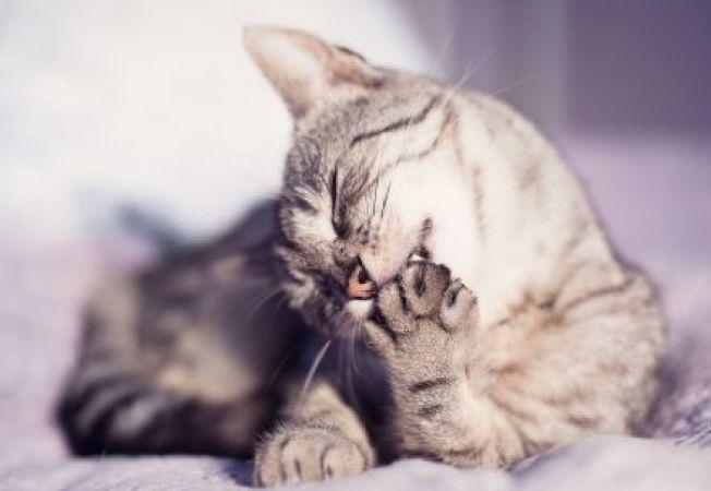 Sfaturi pentru ingrijirea labutelor pisicii