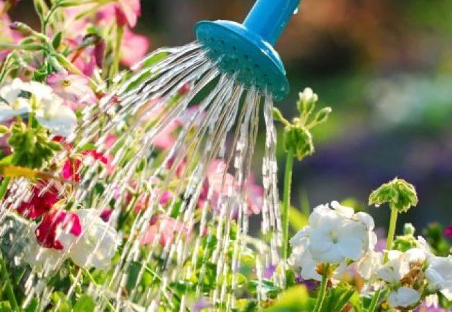 Cum salvezi plantele de la moarte: 3 trucuri eficiente