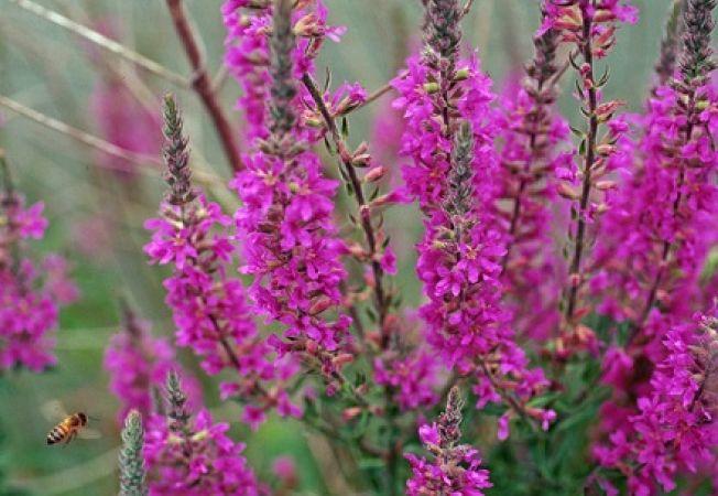5 plante cu efecte daunatoare in gradina
