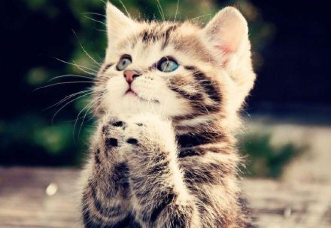 6 motive pentru care iubim pisicile