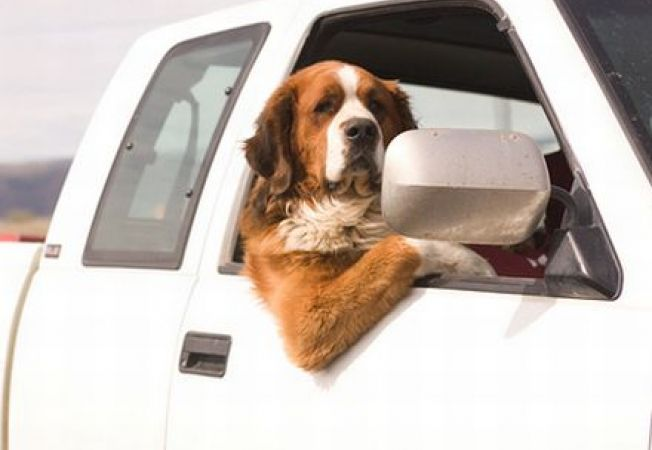Mergi cu cainele in vacanta? 5 trucuri pentru calatoria cu masina