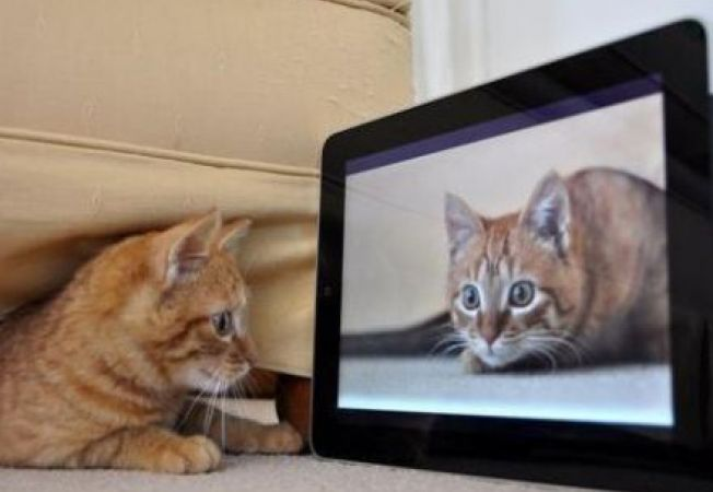 4 aplicatii iPad pentru pisici