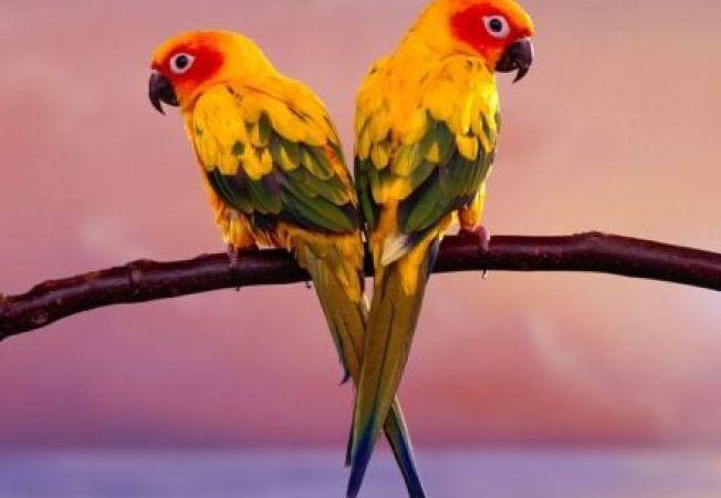 Papagalii vorbesc si sunt monogami! Curiozitati despre aceste pasari exotice