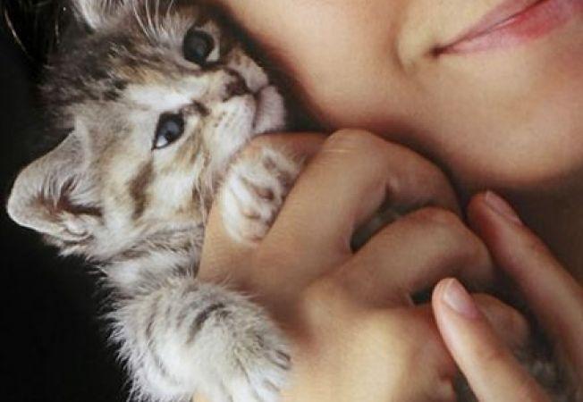 Ingrijirea pisicii: 5 trucuri pentru incepatori