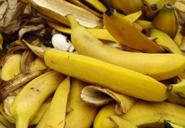 Bananele si utilizarile lor interesante in gradina