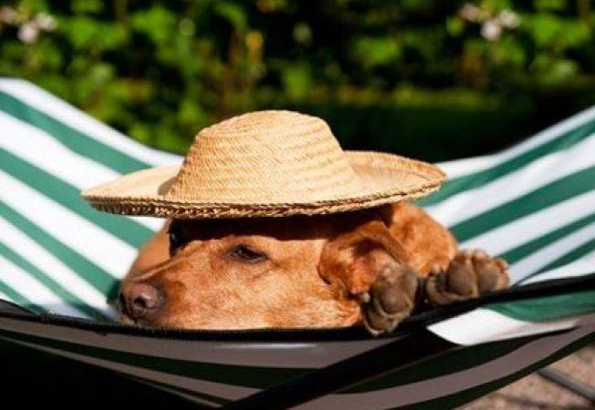 Cum protejezi animalul de companie de canicula