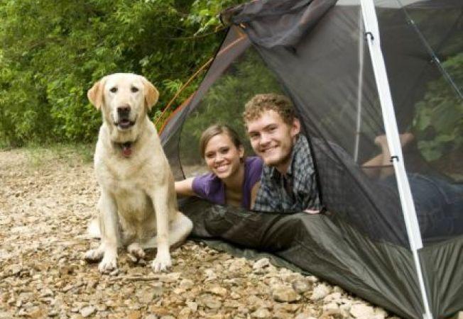 Mergi cu cainele in drumetie? 5 masuri de siguranta pentru caine in camping