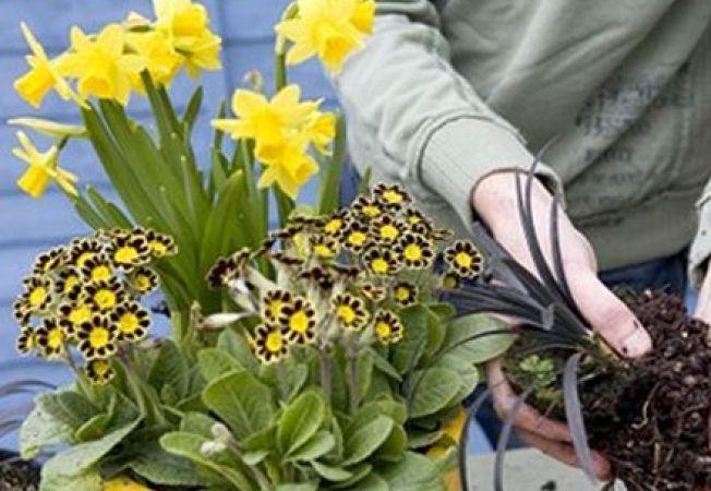 7 pericole ascunse ale aducerii plantelor de exterior in casa