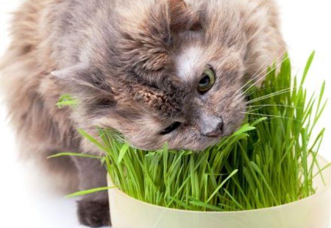 5 comportamente ciudate ale pisicii si explicatiile din spatele lor