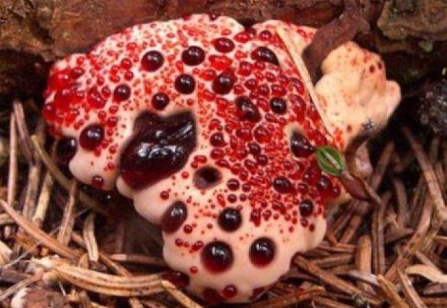 4 dintre cele mai ciudate specii de ciuperci