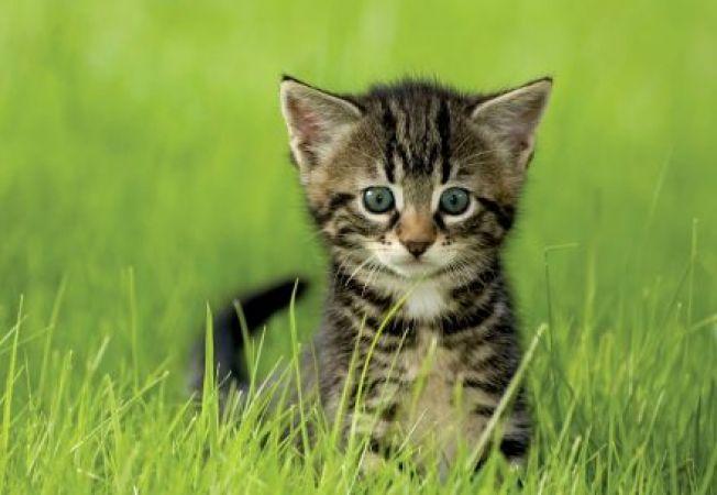 Ce boli frecvente au de infruntat pisicile vara?
