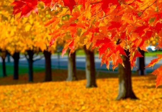 Arbori si arbusti care iti vor colora gradina in aceasta toamna