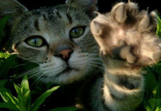 4 metode de a calma o pisica hiperactiva