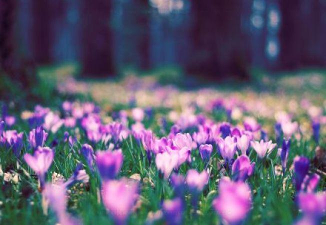 Gradina de flori in nuante mov: ce sa plantezi pentru a te bucura de ea!