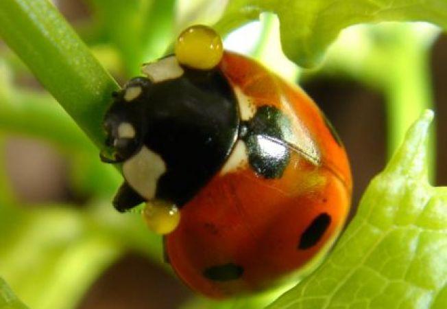 """Insecte bune si insecte daunatoare care """"viziteaza"""" gradinile"""