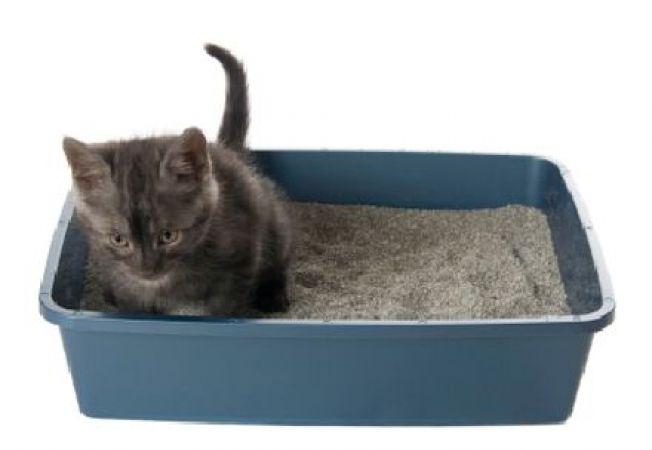 Stii sa alegi nisipul pentru litiera pisicii? Iata 3 sfaturi utile!