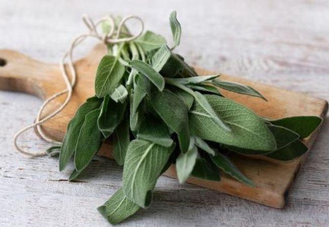 3 plante medicinale surprinzatoare, potrivite pentru gradina ta