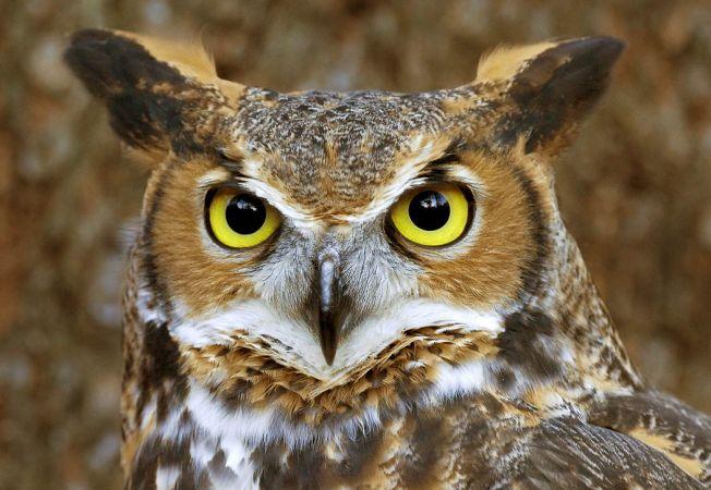 5 animale cu cel mai bine dezvoltat simt vizual