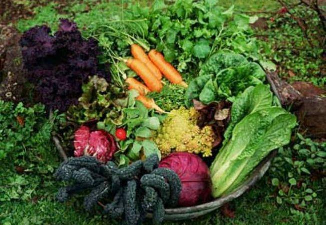 5 exemple de fertilizatori naturali pentru gradina
