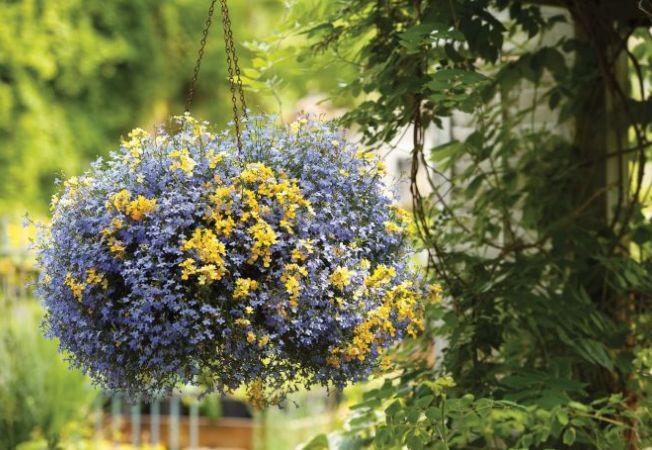 Trucuri care te ajuta sa faci jardinierele sa para pline cu flori