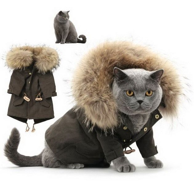 Moda toamna-iarna 2013: 5 tinute simpatice si calduroase pentru pisica ta