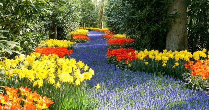 Cum sa-ti amenajezi o gradina superba de flori