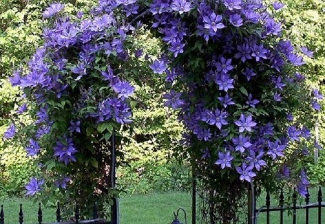 Alege frumusetea plantelor agatatoare pentru gradina ta!
