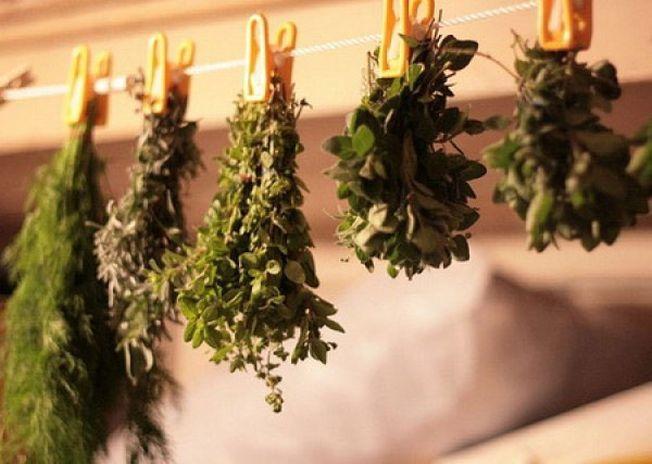 Solutii practice pentru uscarea ierburilor aromatice
