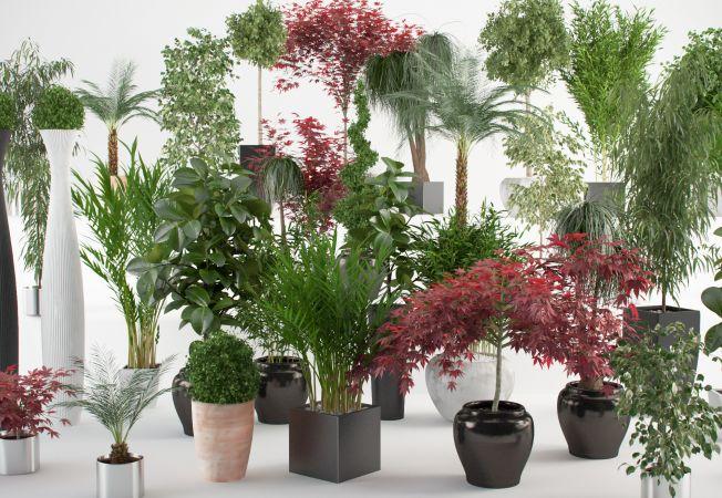 Cum cureti plantele de apartament, pentru a le mentine sanatoase si viguroase