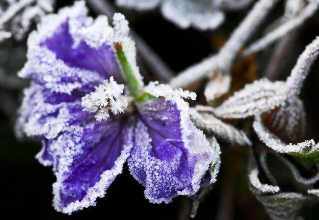 Cum sa-ti protejezi plantele in anotimpul rece