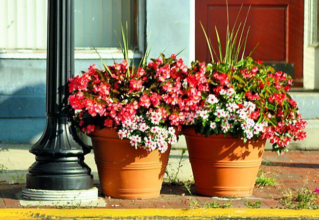 3 moduri de a pastra florile hidratate cat timp esti in vacanta