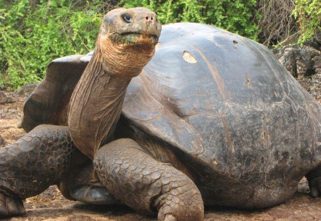 5 cele mai longevive animale din lume